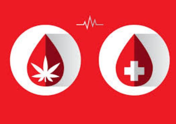 Donar sangre y cannabis