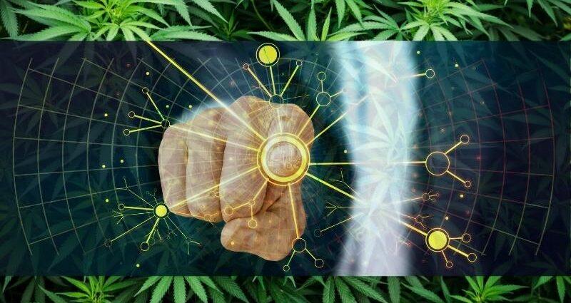 inversiones en cannabis en mexico cannatlan