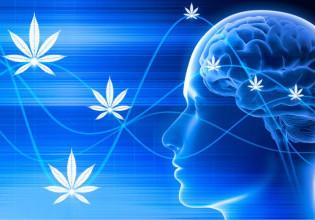 Estudio demuestra que usarios de cannabis o marihuana son exitosos cannatlan.com