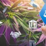 Introducción al Mundo del cannabis cannatlan