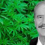 Presidente Fox y marihuana