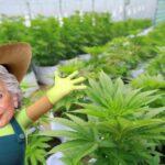 Olga Sanchez Marihuana México Cannatlan