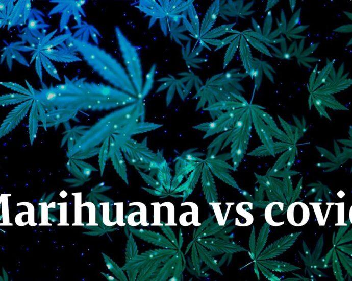 ¿Se puede consumir cannabis antes o después de tu vacuna COVID-19?