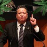 Senador de Morena Julio Menchaca y la marihuana, cannatlan