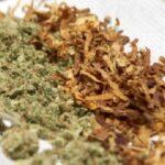 Tabacaleras interesadas en industria cannabis cannatlan