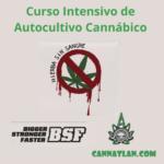 Curso Intensivo de Autocultivo hierba sin sangre bsf cannatlan