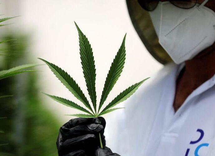 Panorama legislativo de marihuana medicinal cannabis medicinal em México cannatlan.com