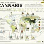 Los 6.000 años del cannabis medicinal cannatlan